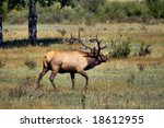 a bull elk chases after his... | Shutterstock . vector #18612955