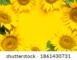 Frame From Beautiful Sunflowers ...