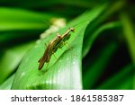 The Mantis Rests On Top Of A...
