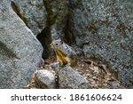 Shot Of A Squirrel In Yosemite...