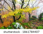 Autumn Nature Landscape.misty...
