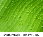 Water drops on green banana...