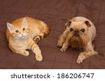 Stock photo dog and orange kitten sleeping together on the bed 186206747