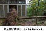 Tree Uprooted By Hurricane...