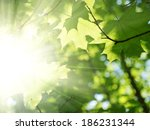 green leaves and sun beams | Shutterstock . vector #186231344