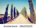 cypress alley leading to the... | Shutterstock . vector #186253265