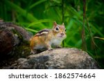 Chipmunk Collecting Seeds For...
