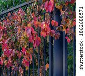 Vintage Garden Metal Fence...