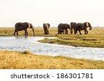 elephant in chobe national park ...   Shutterstock . vector #186301781