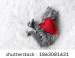Cute Little Gray Fluffy Kitten...