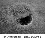 Haunted Old Well In The Backyard