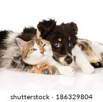 Stock photo close up dog with cat together isolated on white background 186329804