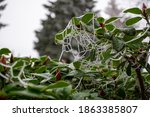 Frozen Spider Web On Green Plant
