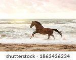 Horse Running In Freedom At The ...