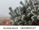 A Snow Covered Fir Tree  On The ...