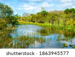 View Of Wetland Areas In The...