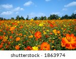 vibrant field of wildflowers | Shutterstock . vector #1863974