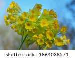 Bouquet Of Yellow Spring...