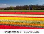People Standing In Tulip Field...