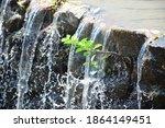 Tree Between Waterfalls .small...