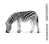 hand drawn zebra eating grass.... | Shutterstock .eps vector #1864203907