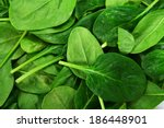 Background Leaves Of  Spinach....
