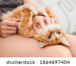 Woman Strokes Belly Of Cute...