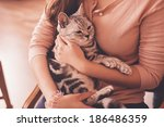 Striped Cat Lying In Woman Hands