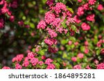 Natural Floral Background ...