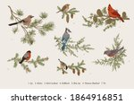 winter birds. set. tit  robin ... | Shutterstock .eps vector #1864916851