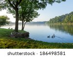 Geese By The Shore Of A Lake O...