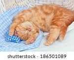 Stock photo little cream kitten sleeping on a blanket 186501089
