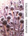 Coneflower Dry Flower Heads...