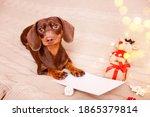 A Dachshund Puppy Lying On The...