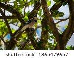 Elegant Blue Bird Perched On A...
