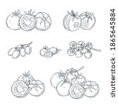 hand drawn tomatoes on white... | Shutterstock .eps vector #1865645884