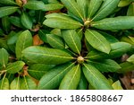 Green Exotic Tropical Leaves...