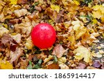 A Red Rubber Baby Ball Is Lying ...