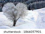 Heart shape tree in winter snow ...