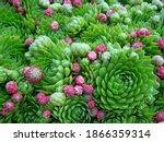 Succulent Cactus Plant As Green ...