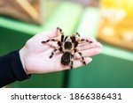 A Large Black Spider On The...
