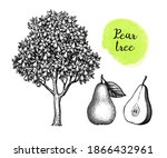 pear tree and fruits. ink... | Shutterstock .eps vector #1866432961