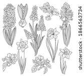 First Spring Flowers. Hyacinths ...