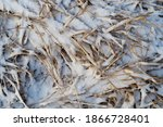 Lying Dry Grass Covered With A...
