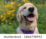 Dog Smiling In A Beautiful...