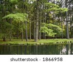 A quiet forest pond surrounded by evergreens. - stock photo