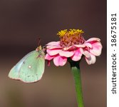Pastel butterfly on flower - stock photo
