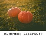 Two Pumpkins On The Grass....