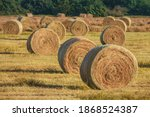 Freshly Rolled Hay Bales On...