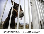 Donkey locked in fence  farm...